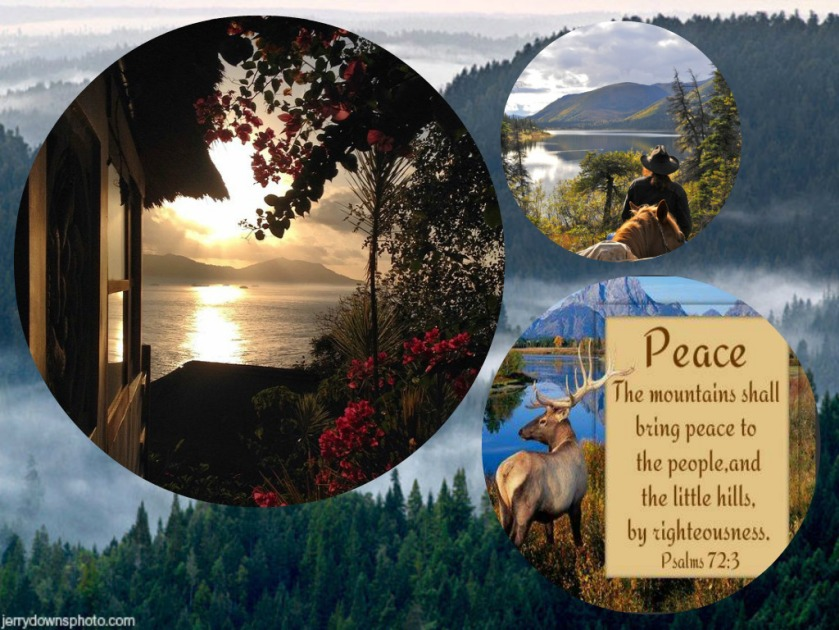 collagepeace